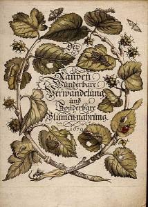 Мария Сибилла Мериан. Обложка книги о гусеницах.