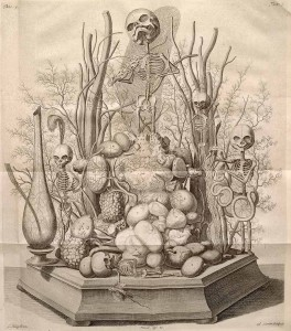 Frederik Ruysch's Anatomical drawings