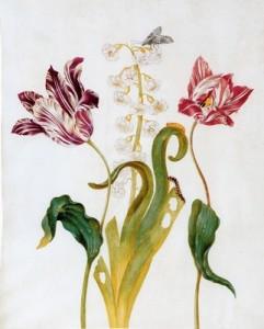 Алида Уитхоос. Тюльпаны